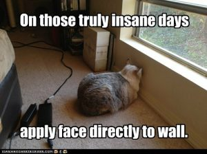 lolcat_funny_cat_pictures_insane_wall